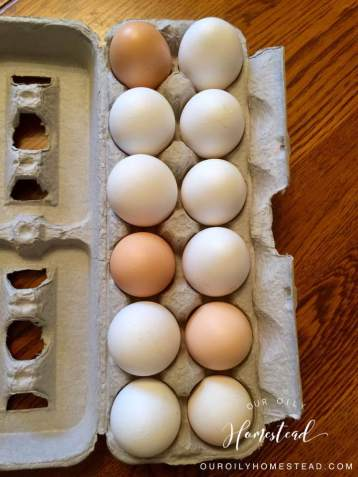 Our Oily Homestead Eggs